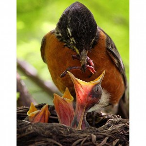 hungry-birds-quiz